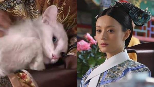甄嬛參加選秀 太后為何放貓嚇唬她?