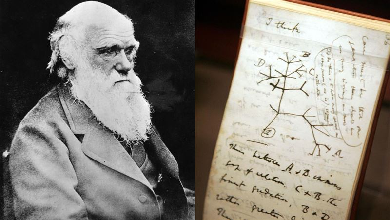 遺失達爾文「物種起源手稿」!劍橋大學圖書館:可能遭竊