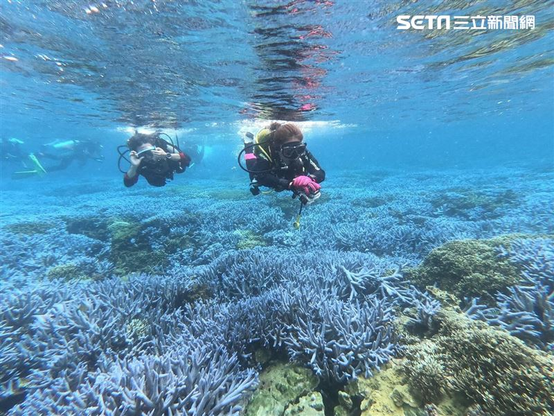 離島秘境/「藍色珊瑚海」真的有!東吉嶼不真實的海底秘境