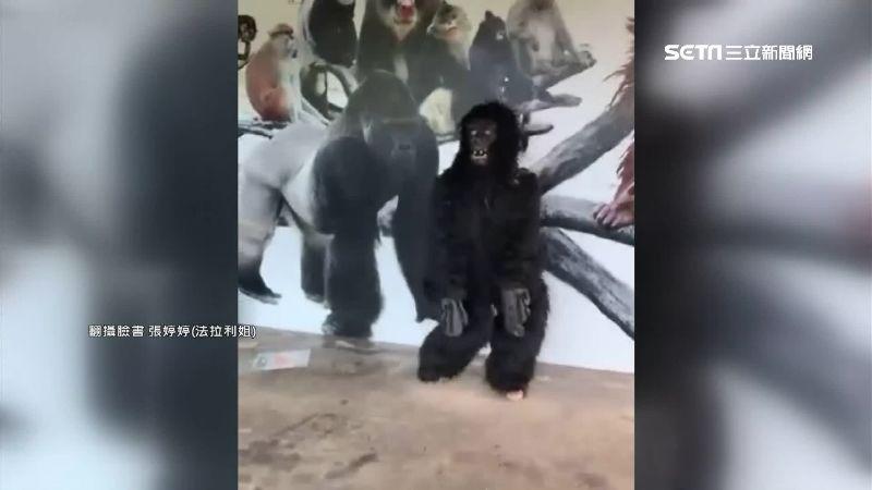 法拉利姐扮猩猩 改當直播主月入4萬