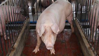 USTR:台標美豬產地暗示食安疑慮