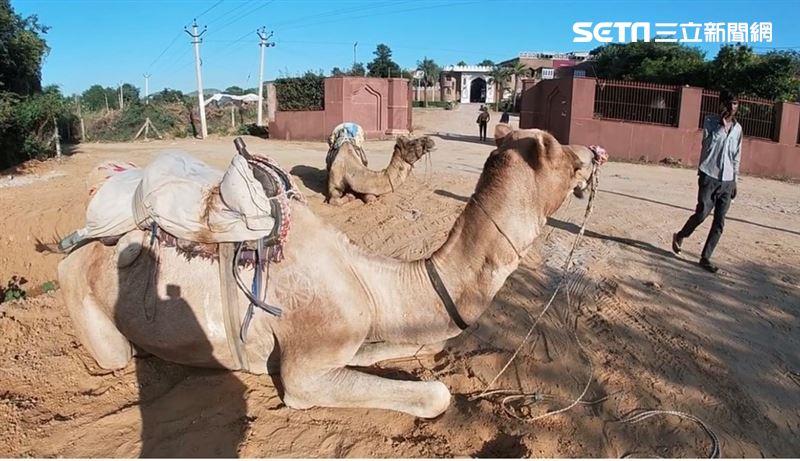 印度秘境/世界最大駱駝市集 體驗普希卡荒漠露營