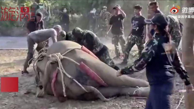 大象挨43槍躺地掙扎 獸醫現場急救「反被象鼻活活打死」