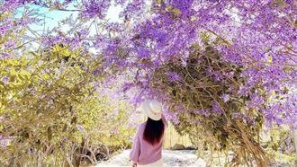 IG紅什麼/南投隱藏版「紫色瀑布」