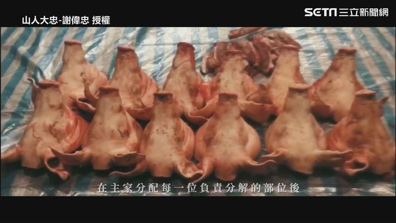 原民嫁女兒特有文化 宰12頭豬送人