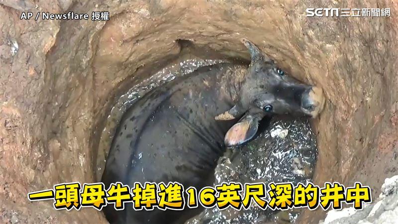 印度母牛墜深井 救援隊1妙招助脫困