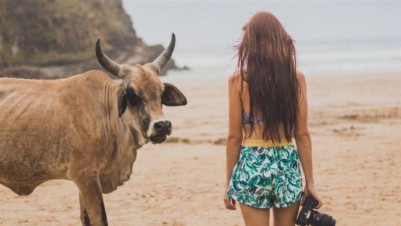 牛年到!江柏樂:6月武肺將牛轉乾坤