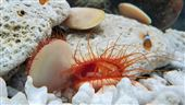 七彩色系海洋生物悠游繽紛海洋夢幻登