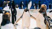 海生館推「我與企鵝的0.1毫米」