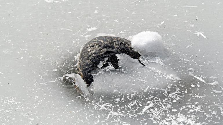 冰凍湖面冒出滿滿「詭異黑石」 湊近一看「真面目」嚇死人