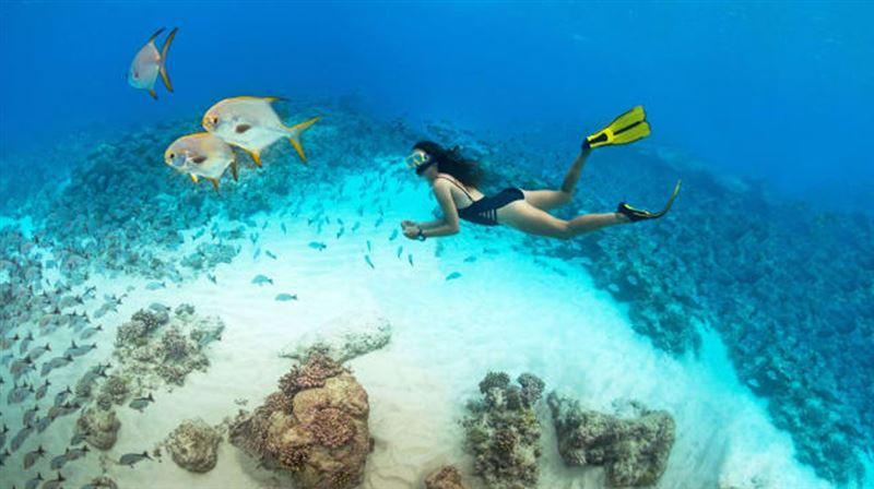 最美外島!全世界最大的海龜棲息地 未受汙染的塞席爾群島