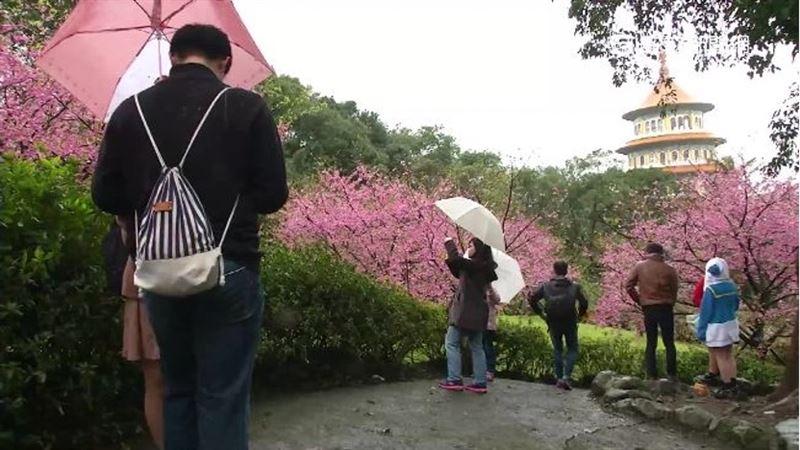 今年春天會少雨?民俗諺語藏神機