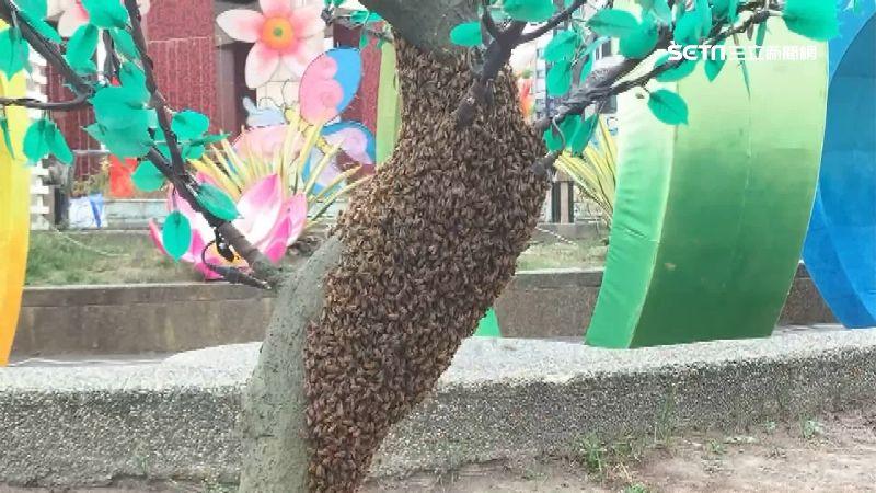 花燈桃樹太逼真 蜜蜂竟在假樹築巢