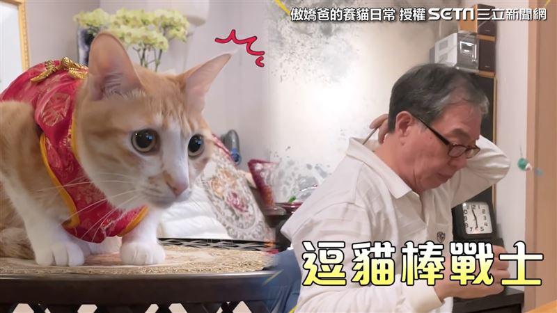 邊打麻將邊逗貓 他秀神技網笑翻