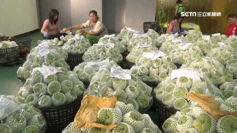 陸海關卡鳳梨釋迦 產地收購價跌2成