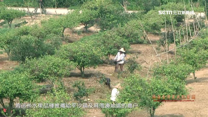 中國「這團體」狂複製台農業技術品種