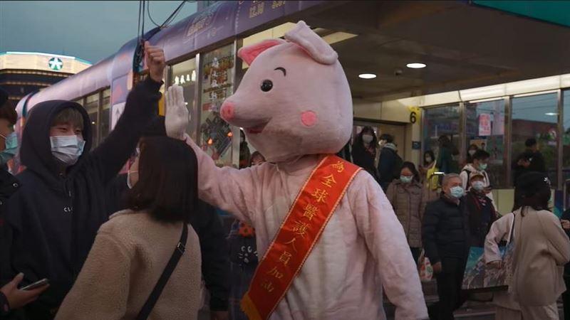 野生粉紅豬街上擊掌 竟是大咖天王