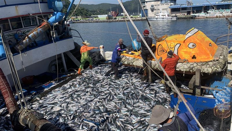 大船滿載!傳承三代「薄鹽鯖魚」年產破億 幕後製程秘密曝