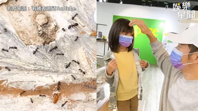 女兒想養螞蟻 宥勝教導正確飼養觀念