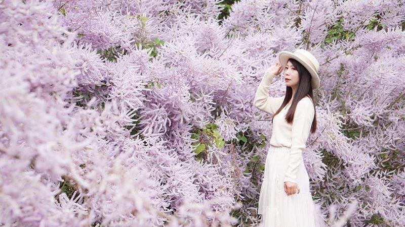 「最美土地公廟」 草嶺公路浪漫粉紫色麝香木滿開