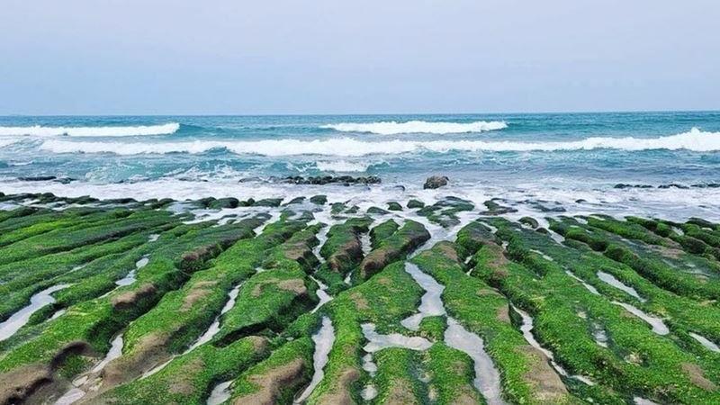 「抹茶地毯」提前轉綠!老梅綠石槽2公里美景現身北海岸! | 名家 | 三