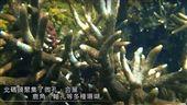 藻礁生態爭議有其他戰場的延伸?