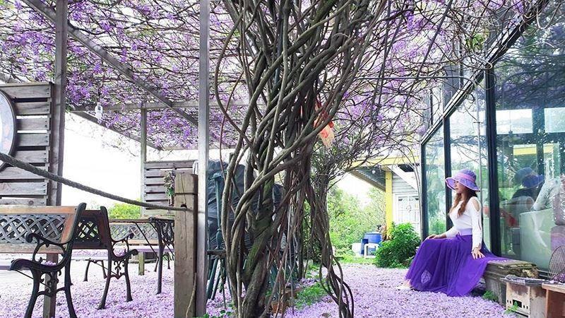 新竹也有紫色仙境!隱藏山林間夢幻紫藤祕境咖啡廳超浪漫! | 女孩 | 三