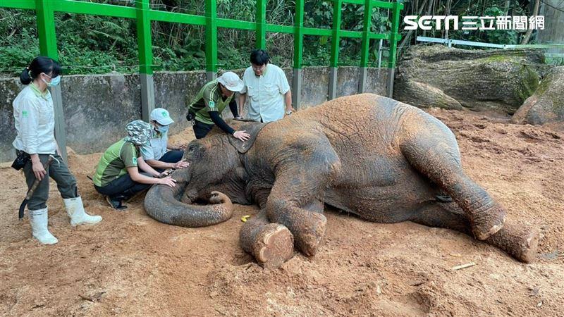 39歲亞洲象「友愷」沒食慾脫水!動物園:請大家幫忙集氣 | 生活 | 三