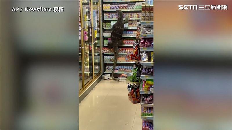 哥吉拉大戰超商!2公尺巨蜥蜴摧殘 顧客尖叫57秒片曝光