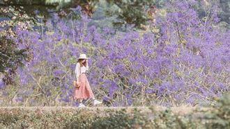 埔里秘境! 粉紫夢幻美景等你來拍照