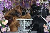 黑武士、丘巴卡出席星戰日。(記者邱榮吉/攝影)