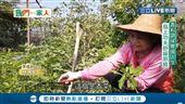 來台21年 她種東南亞無農藥辛香料