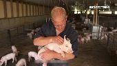 美豬農兼顧永續發展!高科技養健康豬