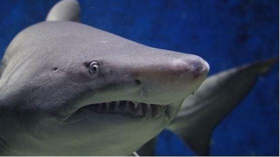 芒種節氣出鯊魚?下雨還是好兆頭