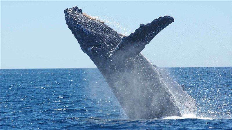 太倒霉!海面躍起一隻鯨 釣魚少年「脖子喀一聲」醒不來
