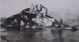 竹南祭江洗港 源自悲傷的鯨魚事件