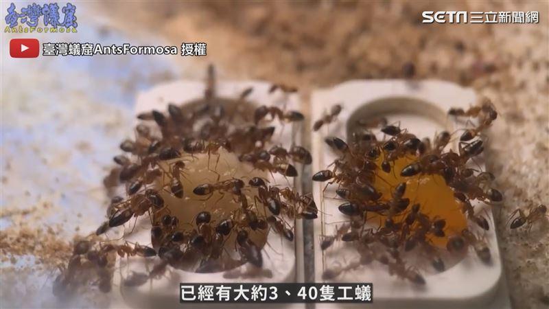 螞蟻吃播2夯水果 比起芒果更愛這款