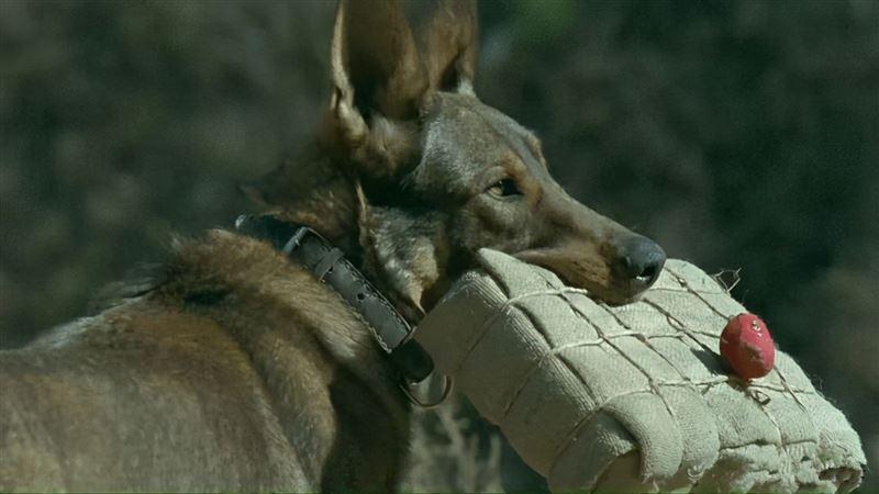 爆破戲來真的!導演將狗綁炸彈引爆