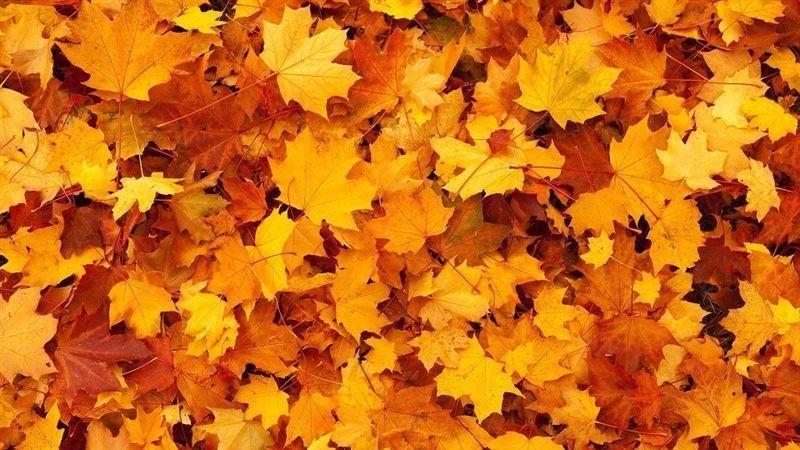 秋分到 這國家秋分當天竟然放假?