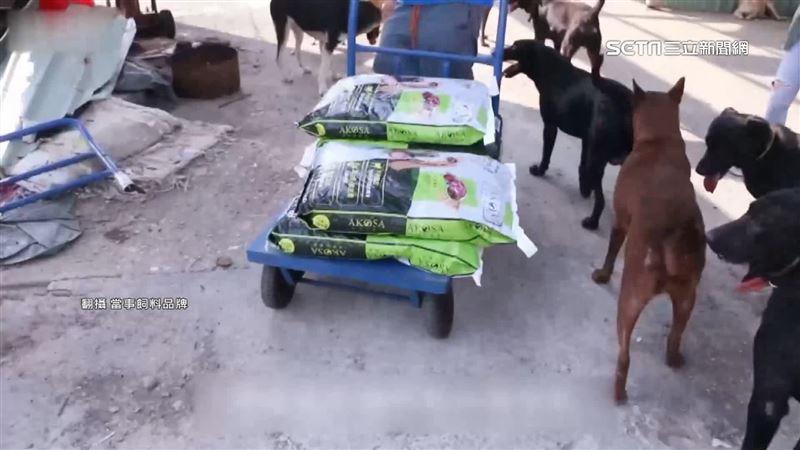 集糧救狗!愛心平台遭爆:就是飼料商